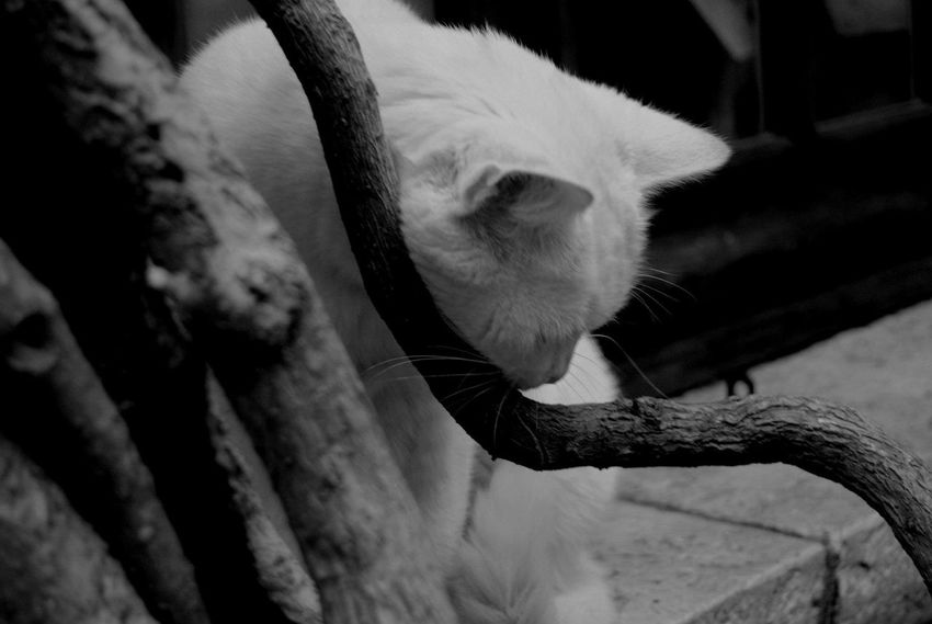Cat Lovers Cats Of EyeEm Elegance In Nature Little Dude Portrait Shooting Sweet Trees