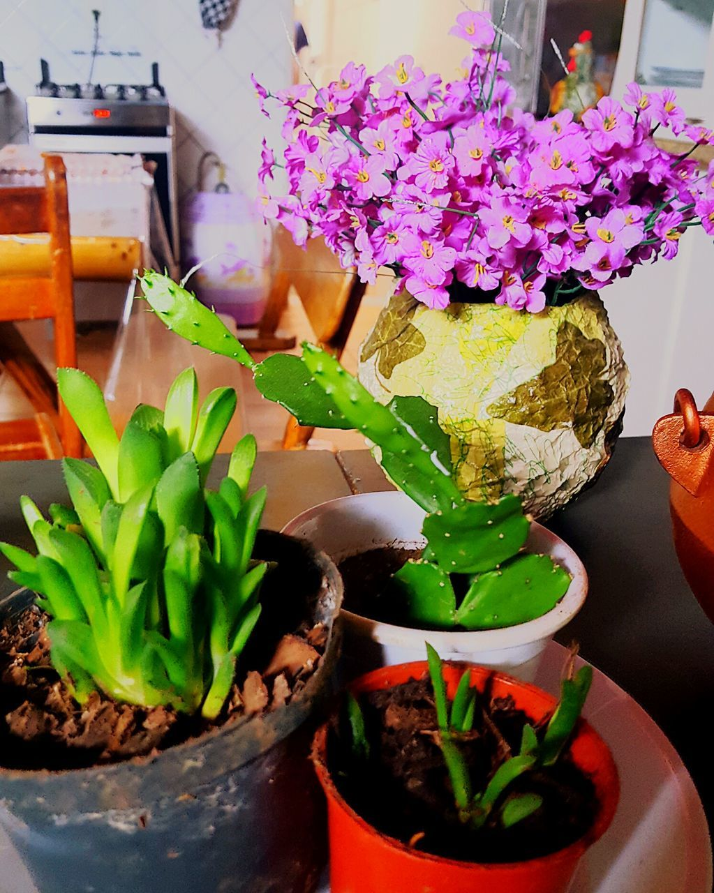 potted plant, freshness, plant, indoors, table, growth, green color, leaf, flower, no people, close-up, nature, day, fragility