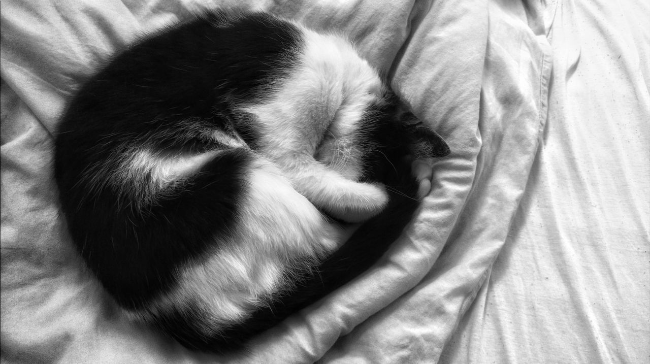 So cute when she Sleep 😍 Home Interior Indoors  Pets Cats Of EyeEm Catoftheday Relaxation Tranquility Lying Down Animal Themes Domestic Cat Domestic Animals EyeEm Best Shots - Black + White EyeEm Best Shots EyeEmbestshots EyeEmBestPics Eyeemphotography EyeEm Gallery The Portraitist - 2017 EyeEm Awards B&W Collective