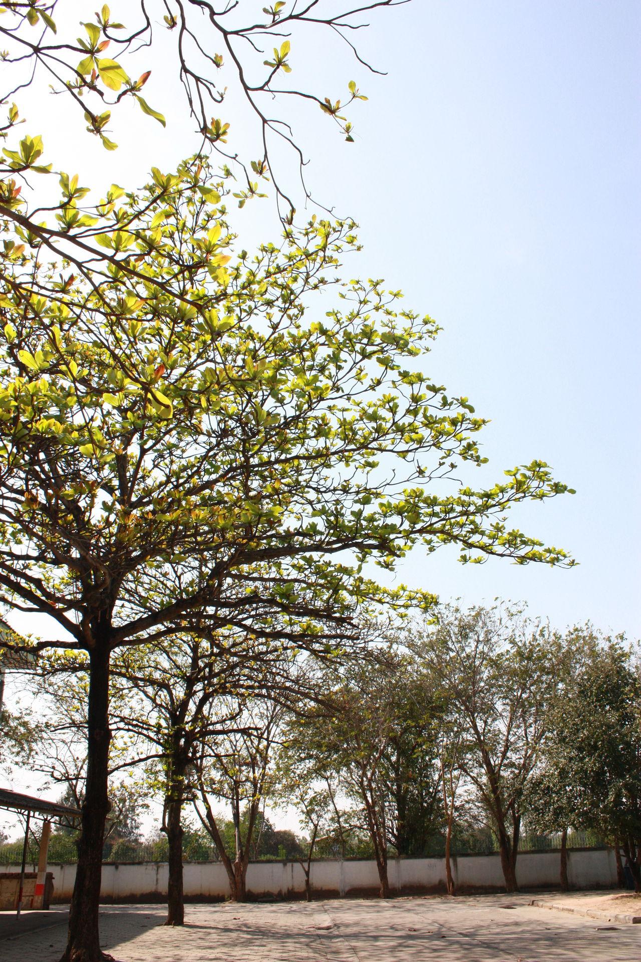 Tree Leaf Malabar Early First Eyeem Photo
