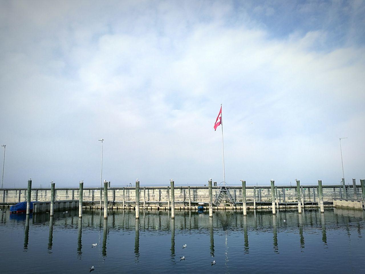 🐦🇨🇭🌍 Seagulls Lake Reflection Nature Switzerland
