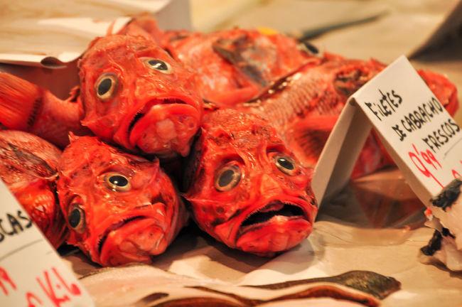 Big Eyes Cadiz Close-up Cádiz, Spain Dead Animals Fish Fish Market Indoors  SPAIN Food Seafoods Seafood Market Cabracho Fresh Fresh Fish Animals