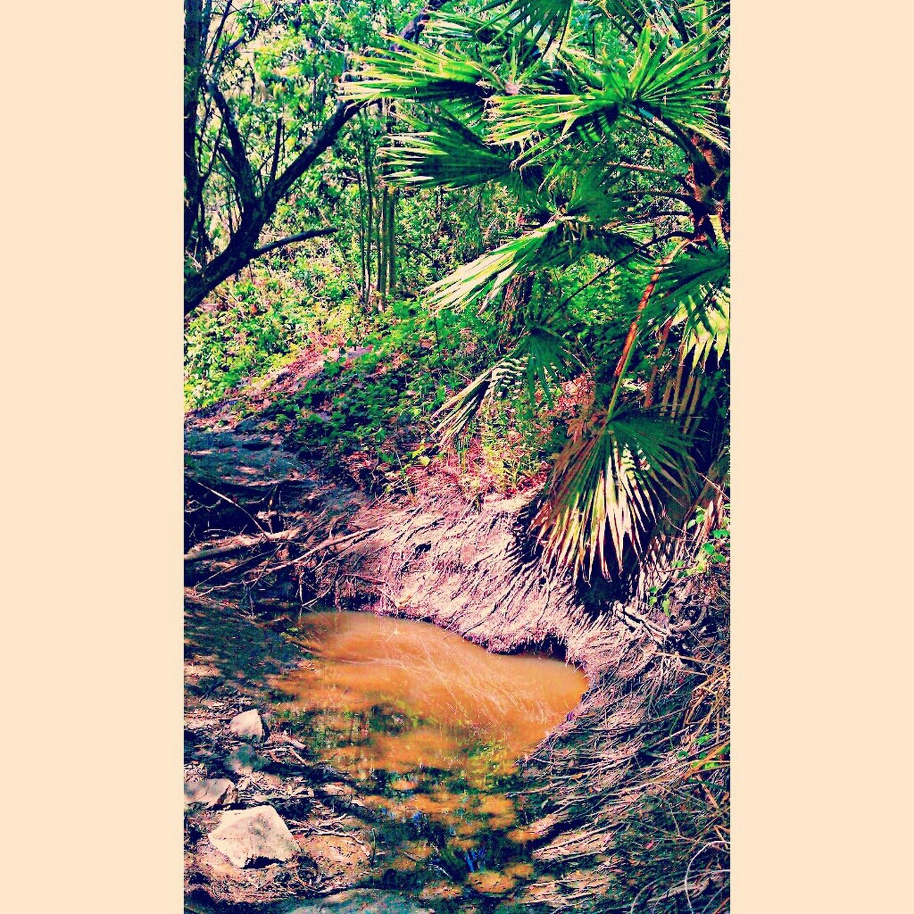 Jungle Fever Hoe! photography by me :) Abstract Nature Beautiful Art Color Photography DOPE Trill Coolshit Jungleshit