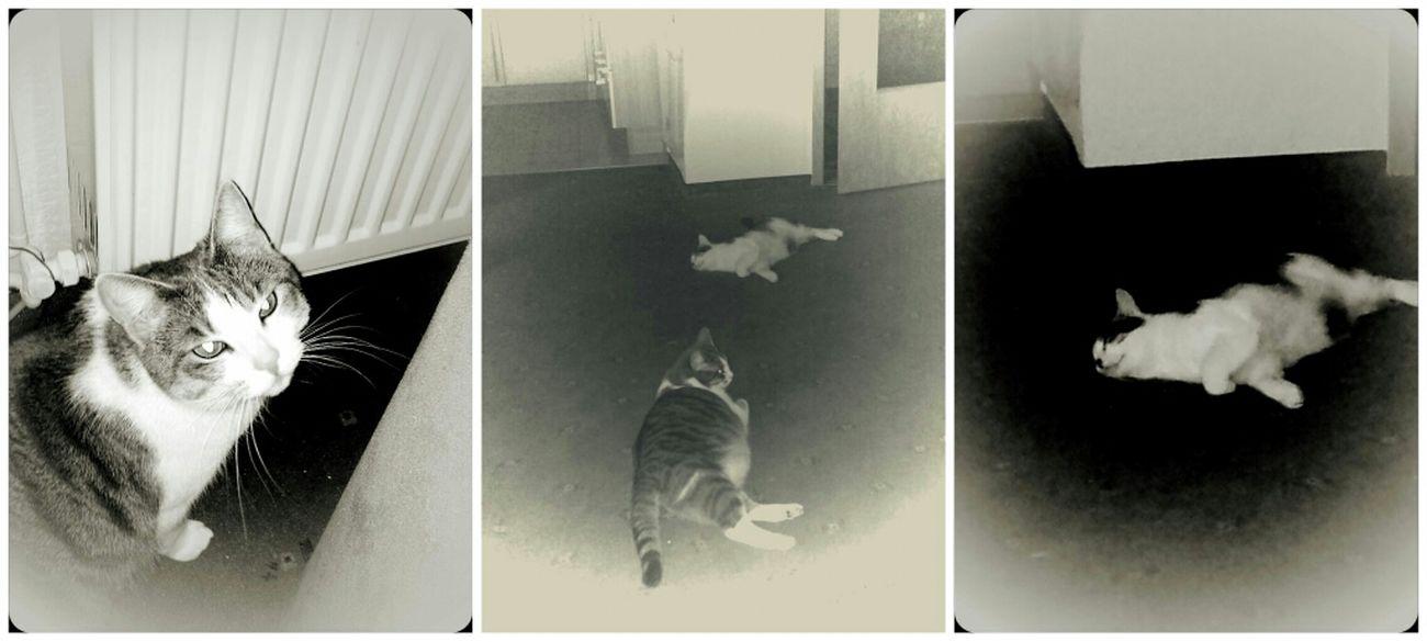 Love Ones Meow :3