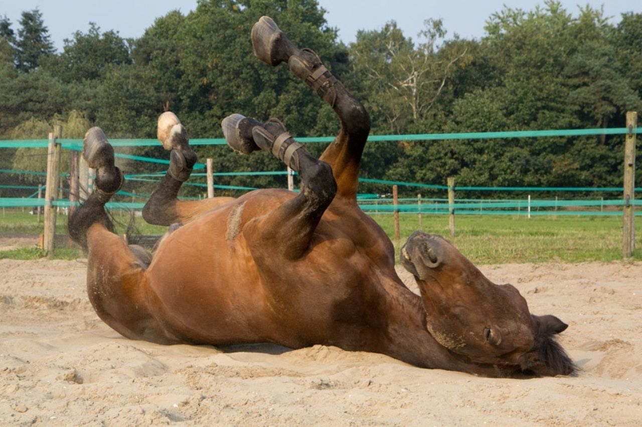 Beautiful Horse Horsepower Relaxing Afterwork FUNNY ANIMALS Animal_collection Enjoying Life Swaanfotografie