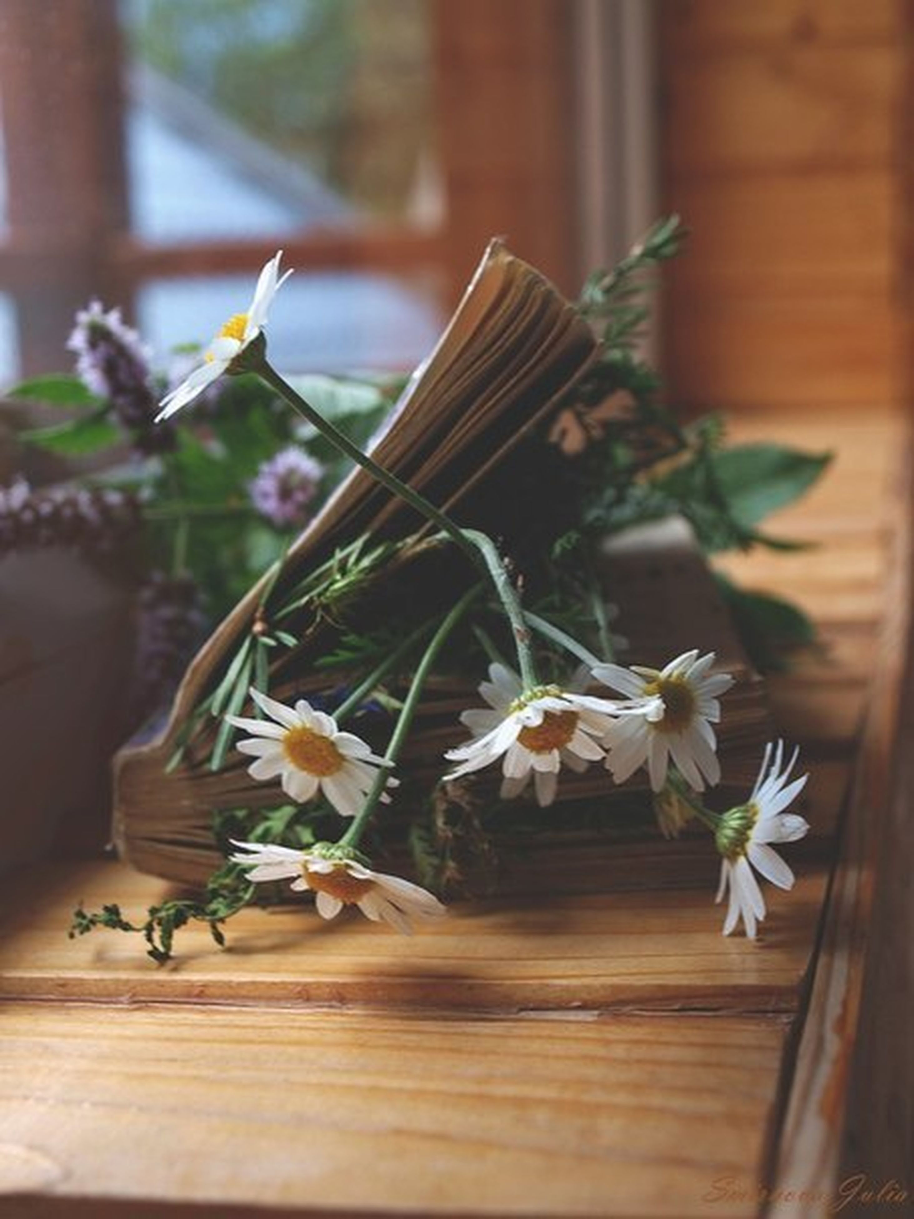 flower, table, indoors, freshness, wood - material, wooden, fragility, petal, vase, focus on foreground, close-up, white color, flower head, selective focus, plant, nature, growth, beauty in nature, still life, stem