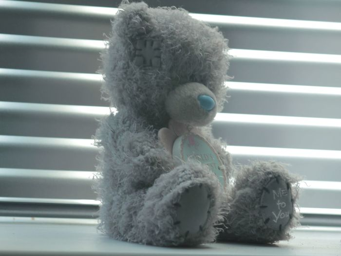 Teddy Bear Stuffed Toy Toy Indoors  Close-up teddy Me2u No People Light And Shadows window day
