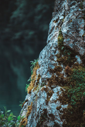 Bark Beauty In Nature Close-up Day Focus On Foreground Growth Lichen Moss Nature No People Outdoors Rock - Object Rough Textured  Tree Tree Trunk