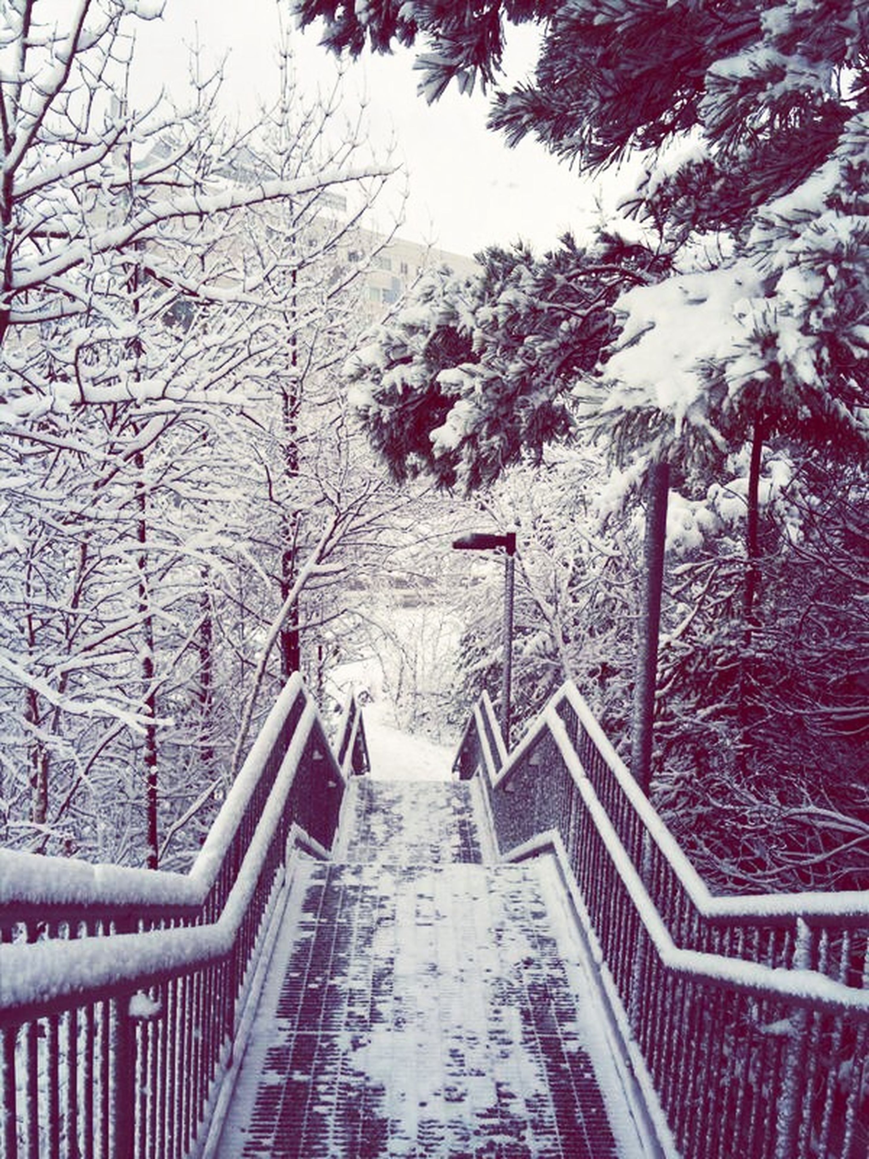 tree, branch, built structure, architecture, railing, bare tree, season, building exterior, the way forward, growth, nature, park - man made space, winter, snow, day, outdoors, flower, no people, steps, tree trunk