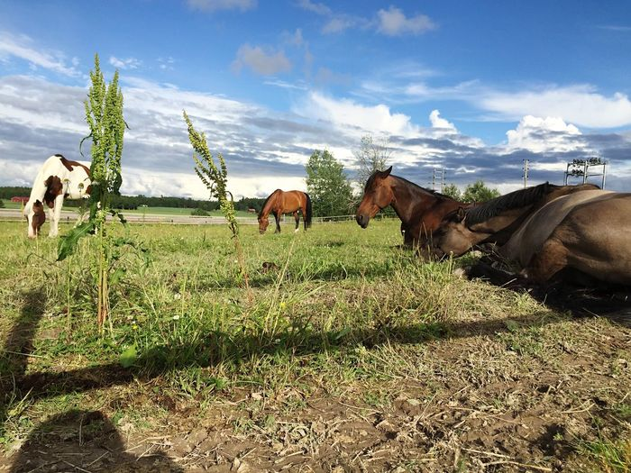 Horses Sleepy Horse Lover EyeEm Nature Lover Relaxing Horse Summer Hanging Out Beutiful
