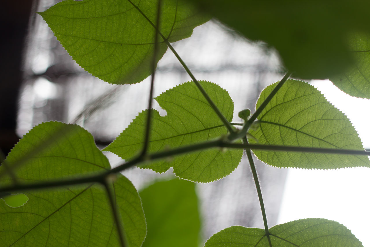 Leaf Lighting Look Under The Leaves