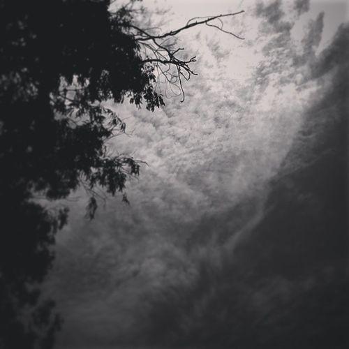 Cloudy affair! Indian India Newdelhi Instaedit Insta_nature Instapic Igers Instagramers Delhiuniversity NorthCampus Hansraj_college Collegelife Insta_bnw Insta_lovers Clouds Cloudy Summers Picoftheday