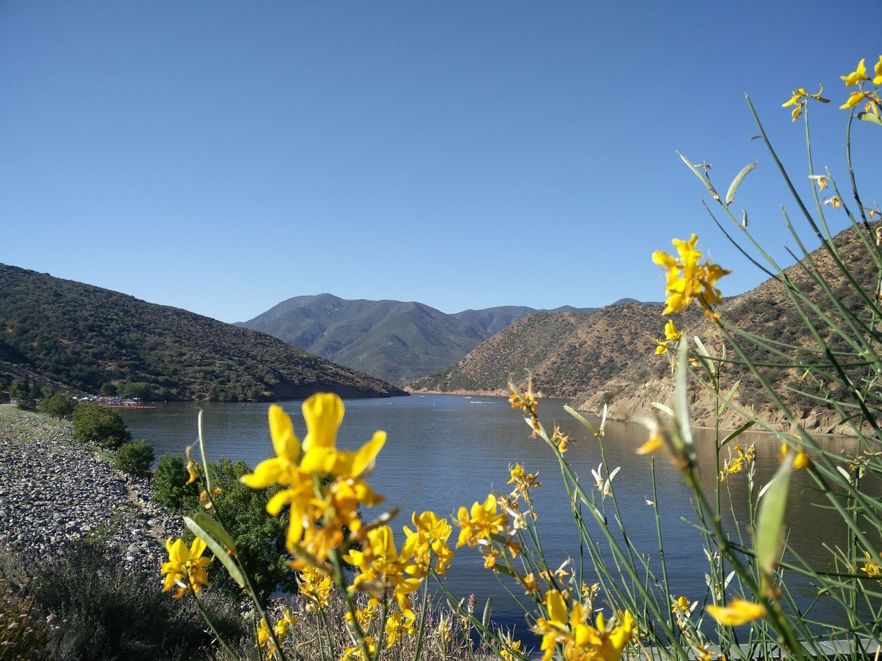 Pyramid Lake Flower Plant Yellow Wildflower Beauty In Nature No People Fragility Mountain Clear Sky Landscape Nature Taking Photos ❤ Outdoors Growth Lakeview EyeEm Best Shots - Nature