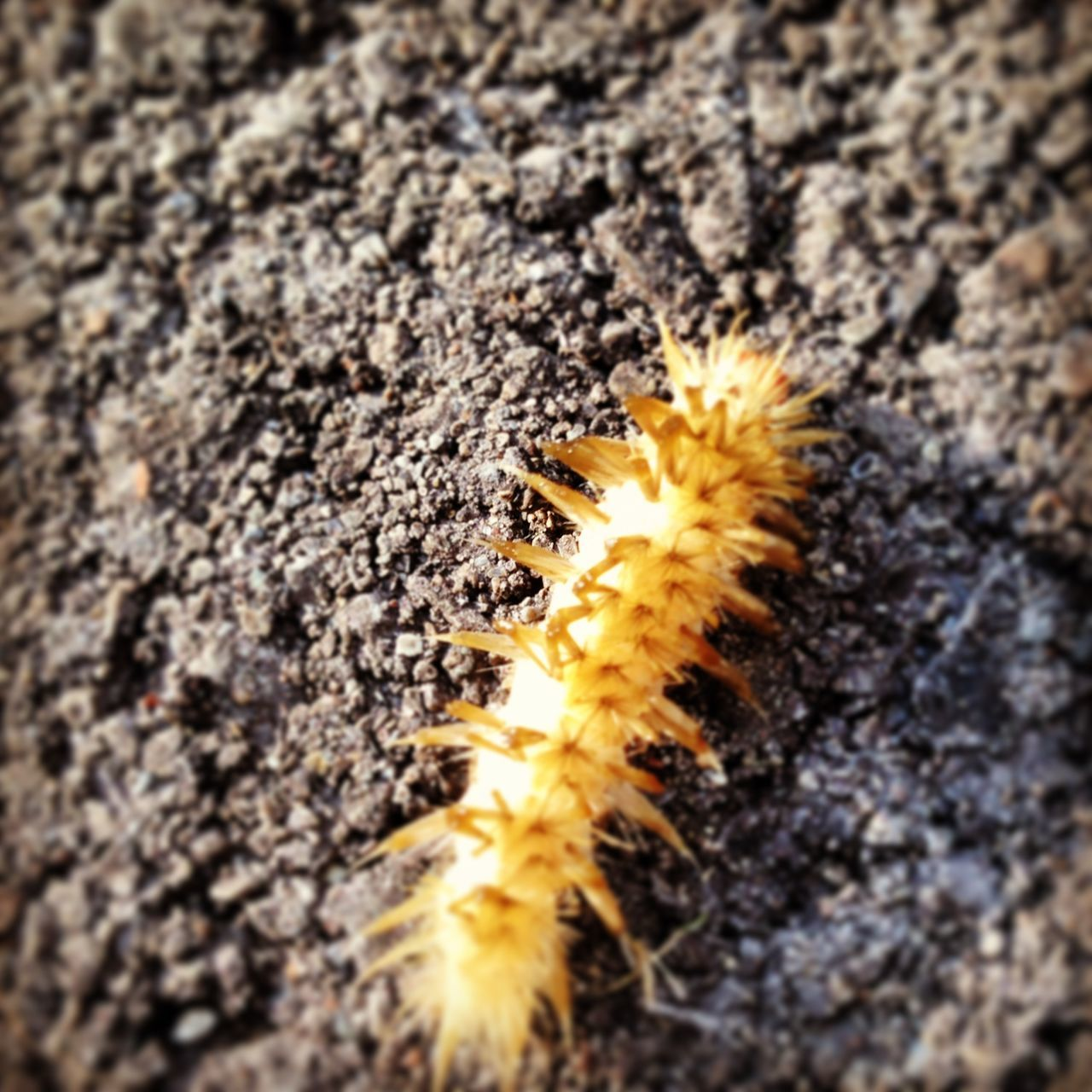 Animal Themes Beauty In Nature Caterpillar Close-up Day Insect Morning Nature No People Outdoors Selective Focus Spiky