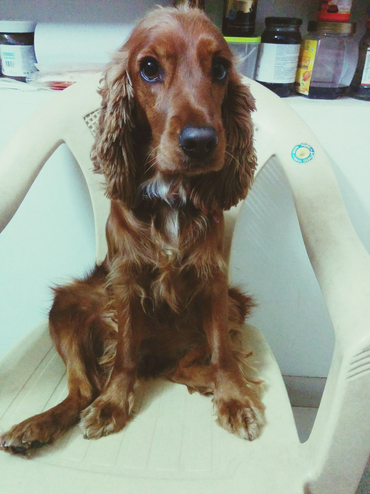 Genie 😍 Genie, Dog, Brown, Girl, Love 😍 First Eyeem Photo