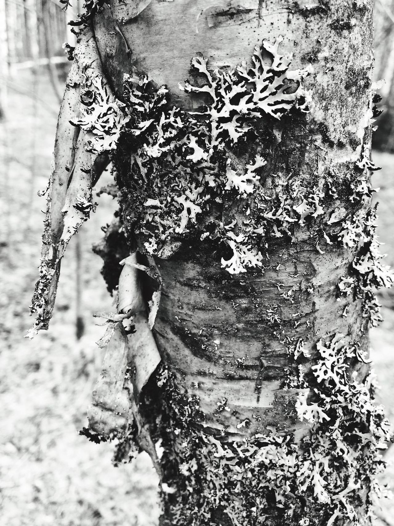 Tree Trunk Outdoors Day Tree One Person Nature Real People Growth Close-up People