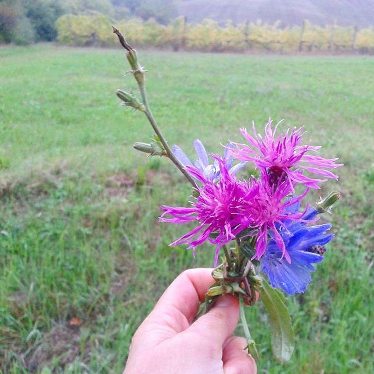 Rain Flowers Flores Vignetoautoctono