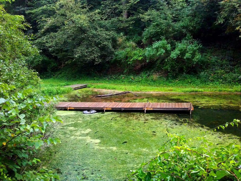 Fishing adventures. Green Color Grass Outdoors Nature Water Beauty In Nature Picturejunkie Check This Out Pretty♡ Dock Moss Freshness Path In Nature