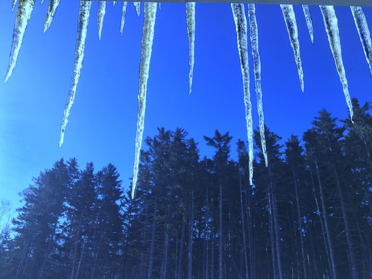 Outdoors Tree Blue Nature Spring Low Angle View Snow Cold Temperature Beauty In Nature Scenics Growth Sky Clear Sky Tranquility Tranquil Scene Day Forest No People Branch Treetop Icicles