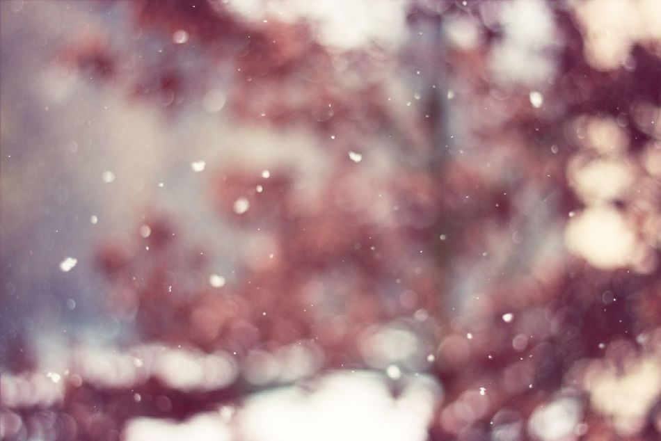 Beautiful stock photos of snowflake, Beauty In Nature, Blurred, Close-Up, Cold