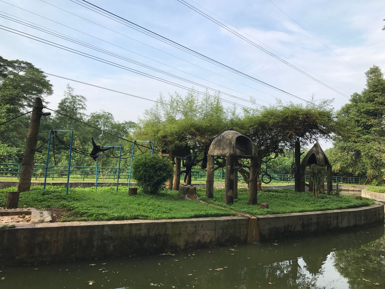At Ragunan Zoopark View By ITag Nature By ITag Animal By ITag