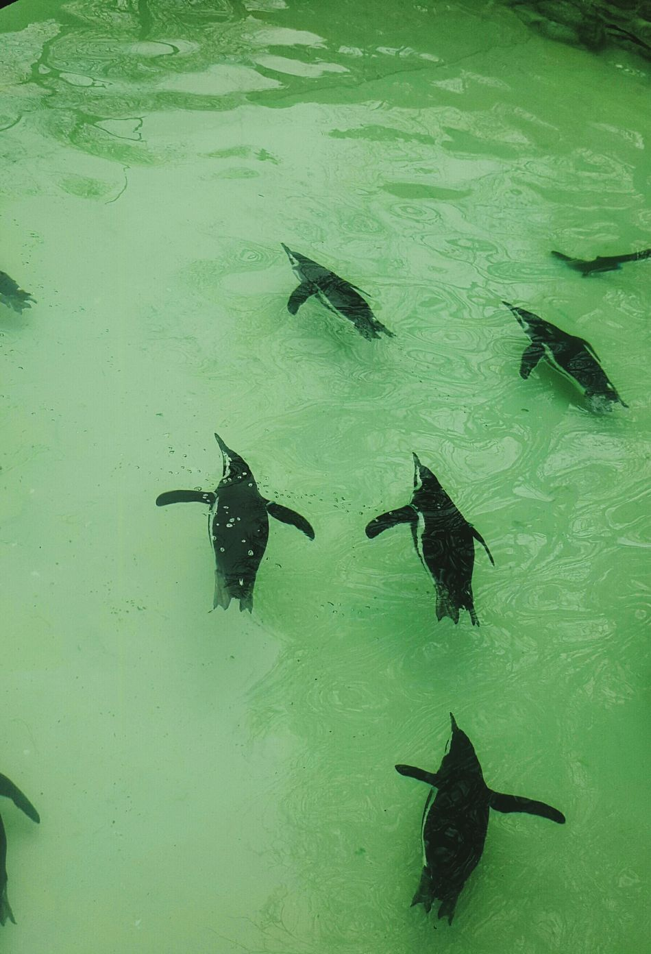 Penguins Green I Can Fly🙌 Water Animals Animal Photography