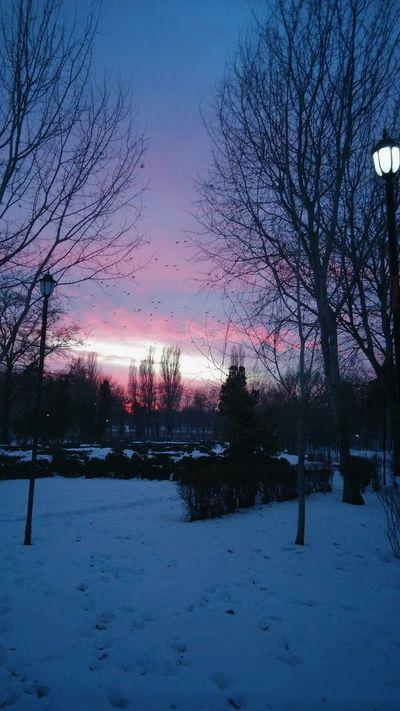 Sunset Winter Sky And Clouds Sky Birds In Flight Footsteps In The Snow Snow Leafless Tree Crimson Sky Outdoors