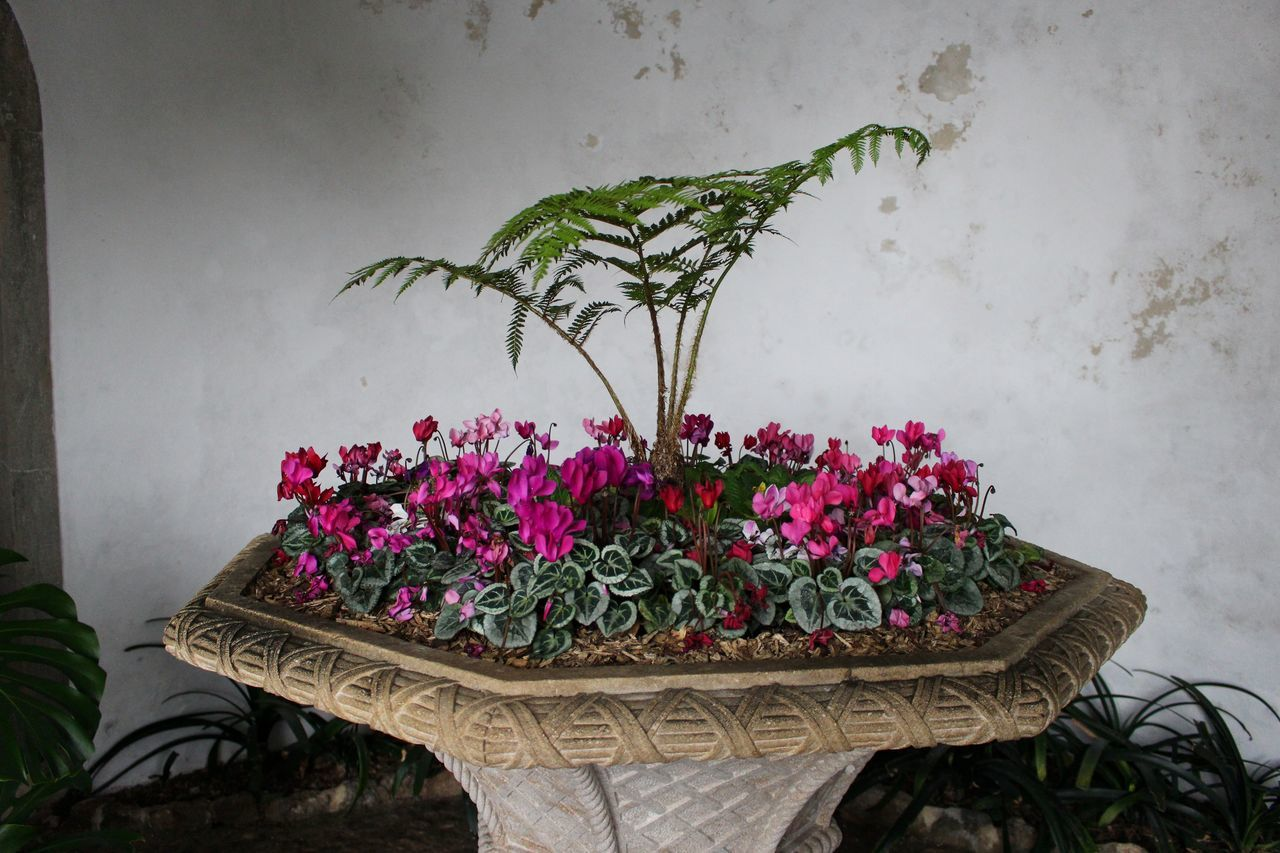 Architecture Close-up Exceptional Photographs Flower Flower Arrangement Flower Collection Flower Pot Fragility Freshness From My Point Of View Green Color Growth Indoors  Leaf Leaves Millennial Pink Nature No People Outdoors Pink Pink Color Pink Flower Plant Plants And Flowers Potted Plant
