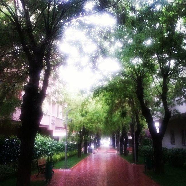 Öpüşme yolu Kissingroad Tandogan Rain