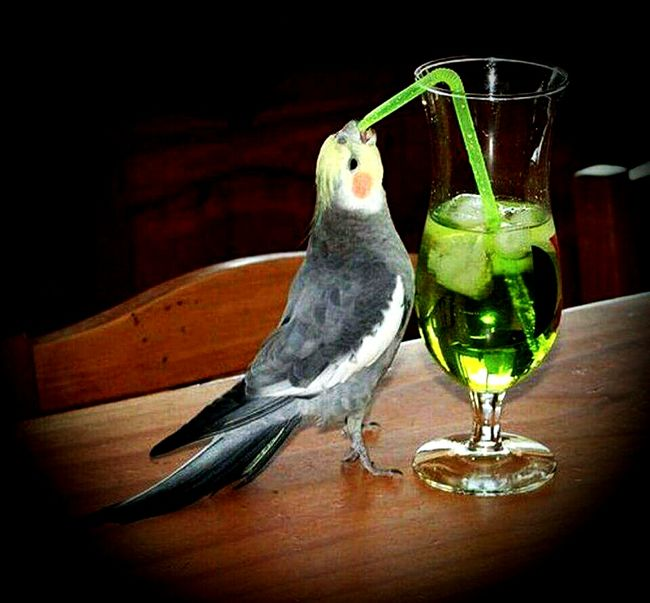 Bird Animal Themes Table Indoors  Food And Drink Close-up Perching Collection No People Zoology Green Color Beak Tranquility Sultanpapağanı Papagan