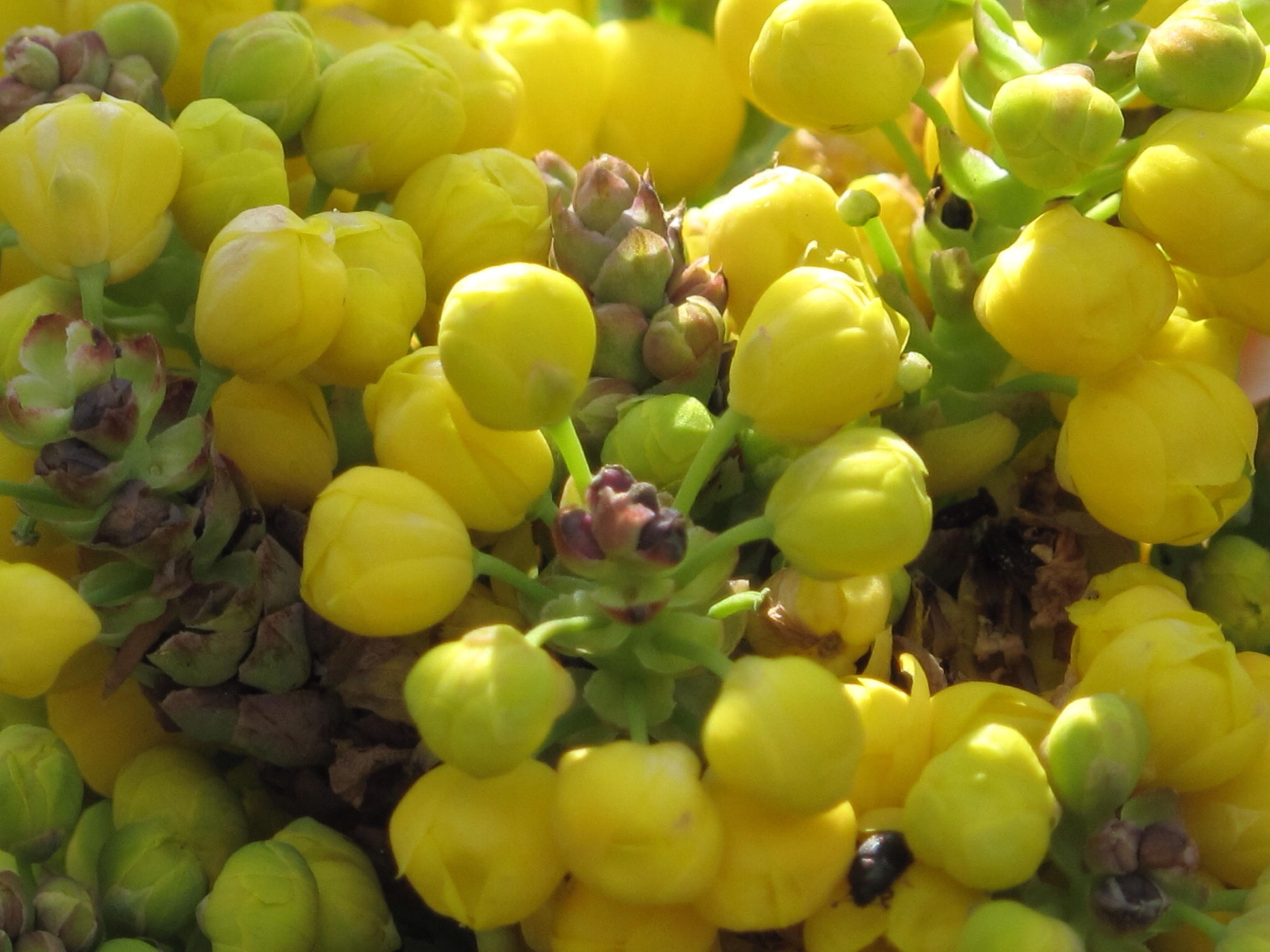fruit, food and drink, freshness, healthy eating, food, yellow, abundance, grape, large group of objects, bunch, close-up, full frame, growth, ripe, green color, organic, backgrounds, variation, no people, day