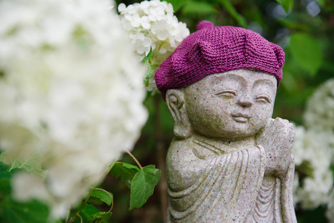 二本松寺 結構楽しめました♪近場にこんな良いとこがあるなんて知らなかったですよ。 あじさい あじさいの杜 紫陽花 Hydrangea Flower Flower Collection 潮来市