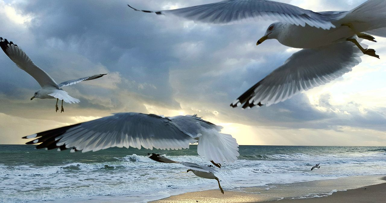 Taking Photos Relaxing Tourism Enjoying Life SEAGULL IN FLIGHT Colors Windy Day Traveling Beauty In Nature Bikini Time❤ Ocean Morning Coffee Romantic Get Close Waves, Ocean, Nature Relaxing Beachlife Waves Crashing Sea And Sky Coffee Time No Care Morning Sunrise Love Dreaming My Life Away ♥