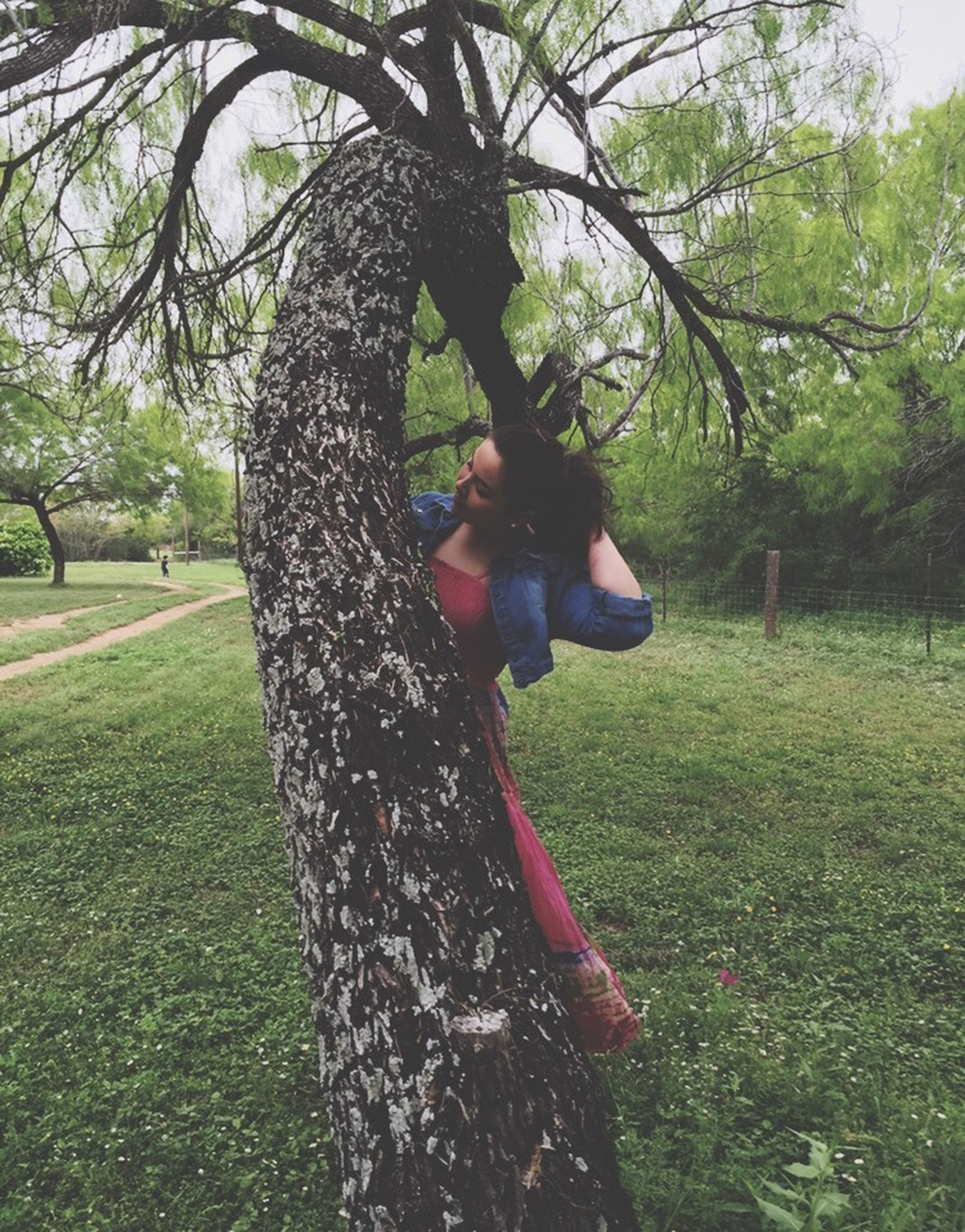 tree, grass, tree trunk, growth, field, park - man made space, green color, sunlight, grassy, nature, day, outdoors, branch, tranquility, park, focus on foreground, close-up, food and drink, lawn, freshness