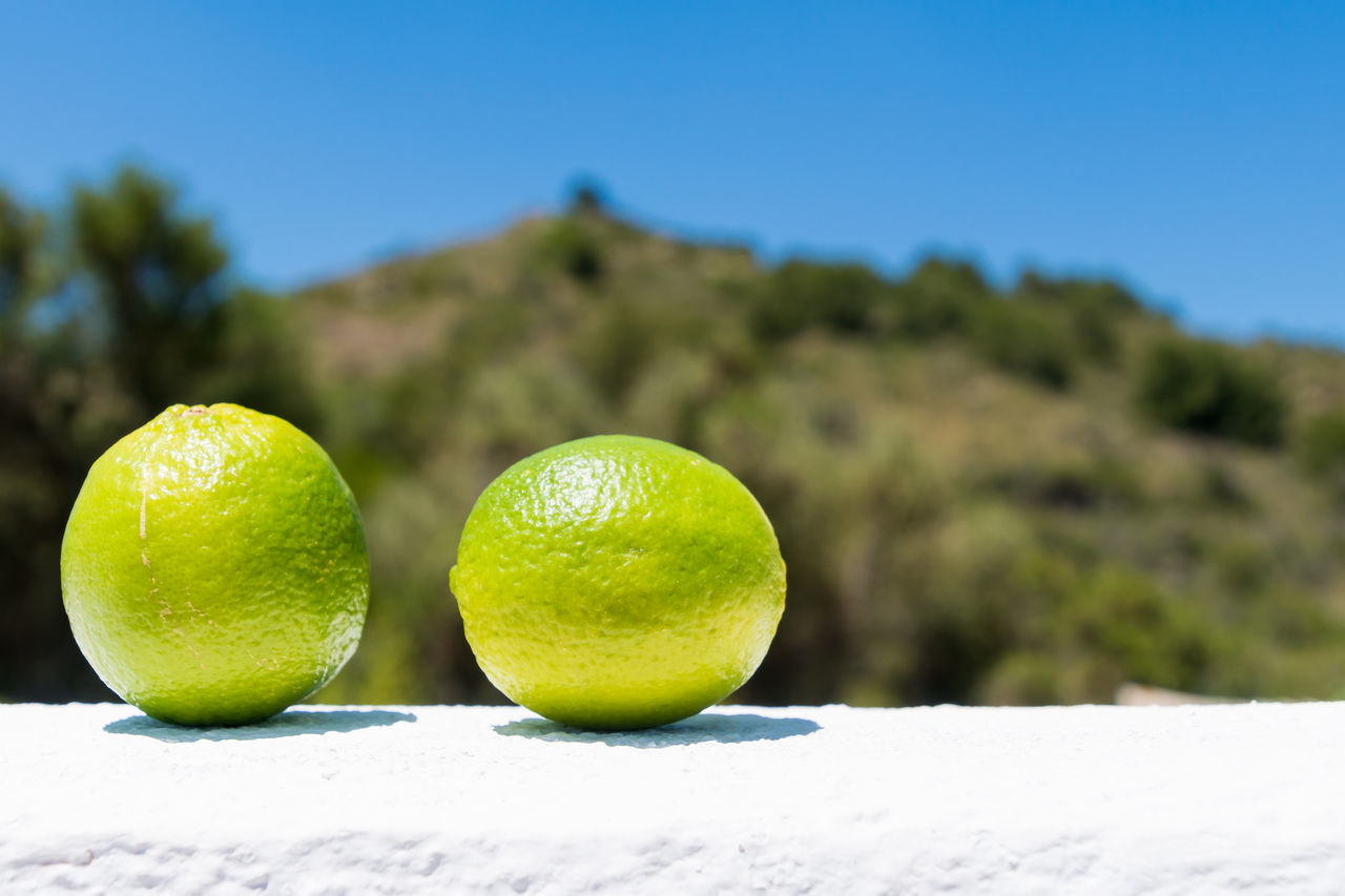 Beauty In Nature Clear Sky Close-up Day Focus On Foreground Food Food And Drink Freshness Fruit Green Color Healthy Eating Lemon Lemons Mountain Nature No People Outdoors Sky Snow Sunlight Sunny Tree