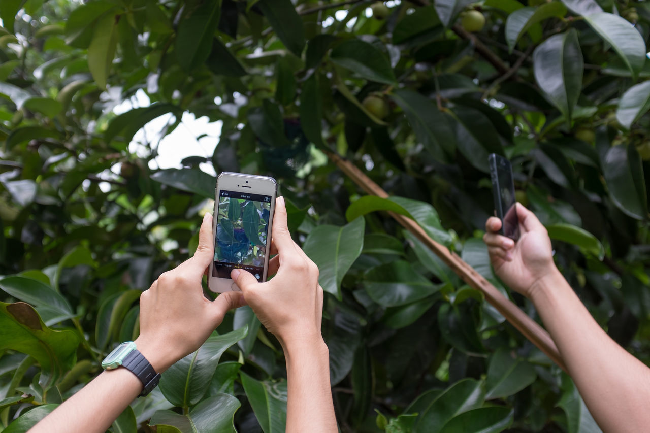 Communication Connection Focus On Foreground Green Color Growth Holding Leaf Leisure Activity Mobile Phone Outdoors Person Plant Portable Information Device Smart Phone Technology Tree Wireless Technology