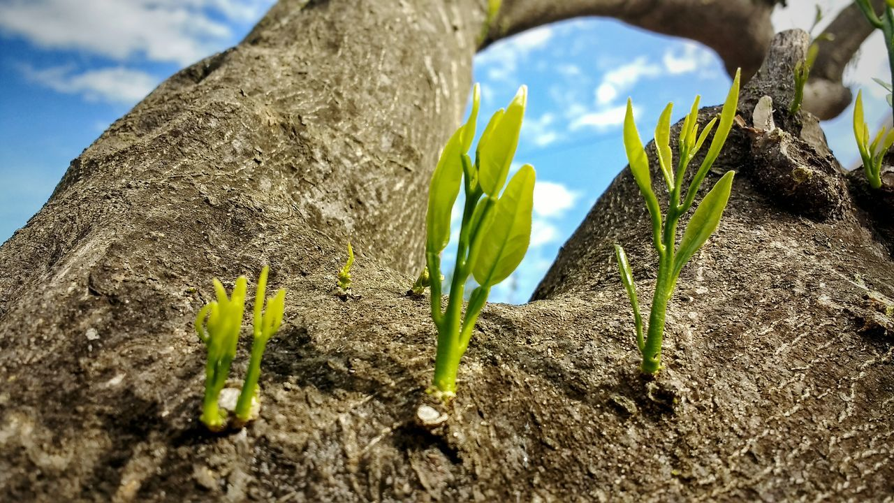 growth, nature, plant, green color, beauty in nature, day, no people, growing, outdoors, fragility, close-up, flower, sky, freshness