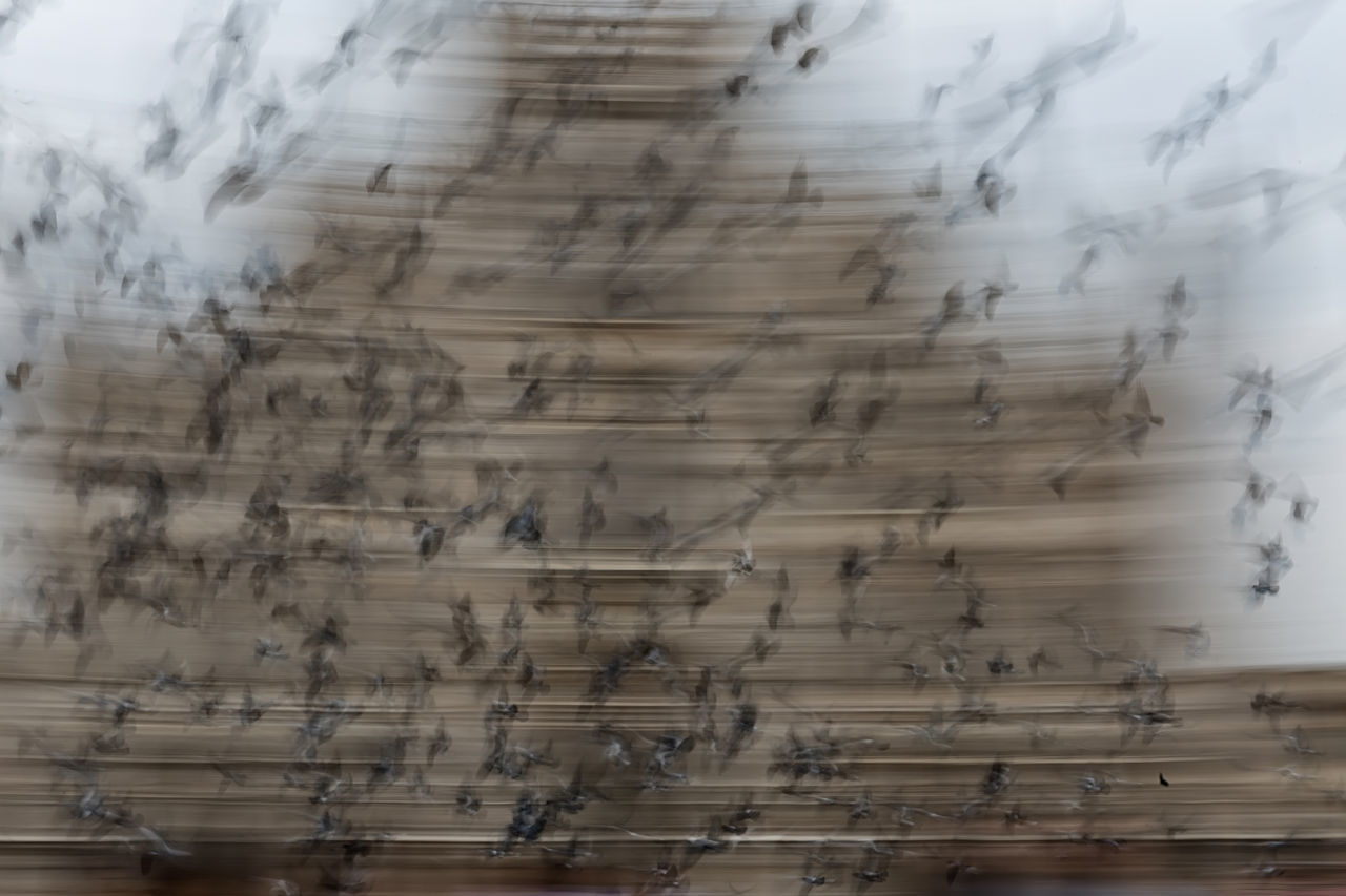 Flock of birds is flying. Flying pegeons in cityscape. Abstract Motion Blur Architecture Backgrounds Birds Birds In Flight Birds Of EyeEm  Birds🐦⛅ Cathedral Close-up Day Flying Flying Bird Indoors  Milan Moving Nature No People Panning Panningphotography