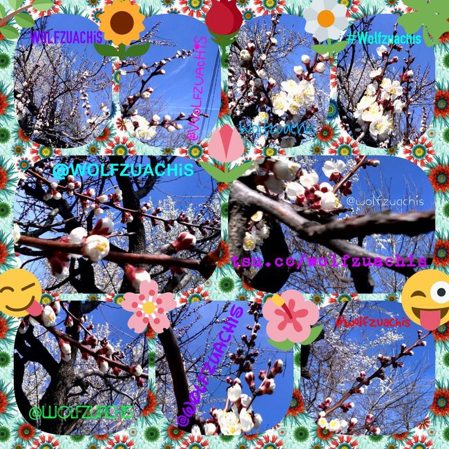 Collage Colaj Wolfzuachis Flowerful