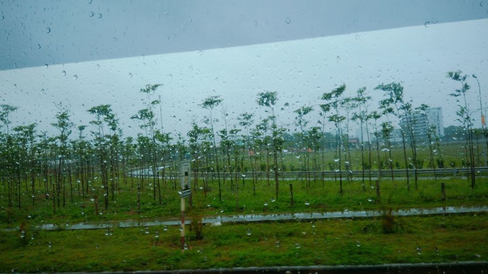 Unreal Tree Rain Bus Summer Storm Life Camera Asian  Vietnam The Week On EyeEm EyeEmNewHere
