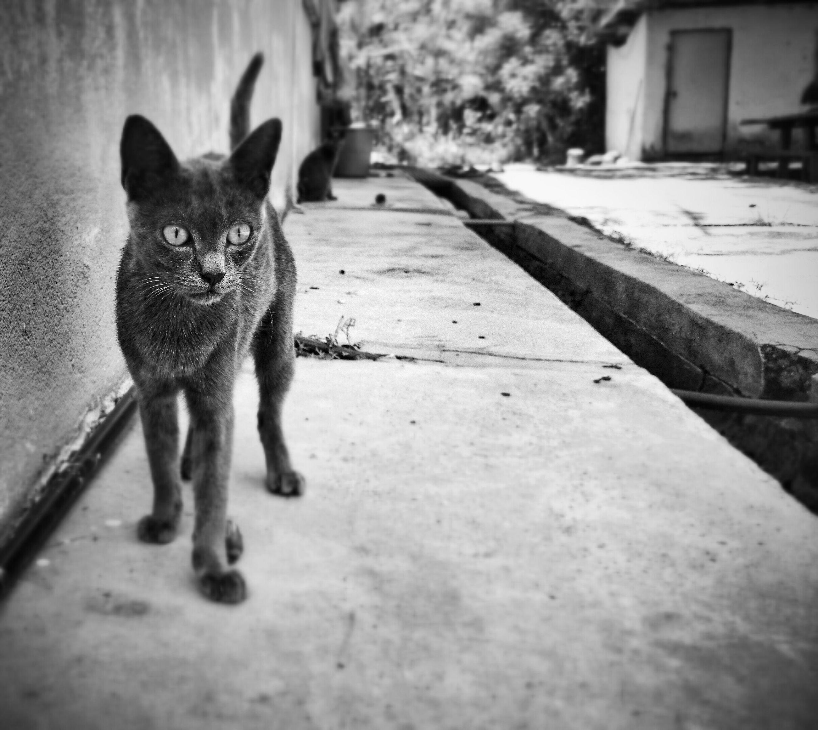Taking Photos Monochrome Cat Watching Animal