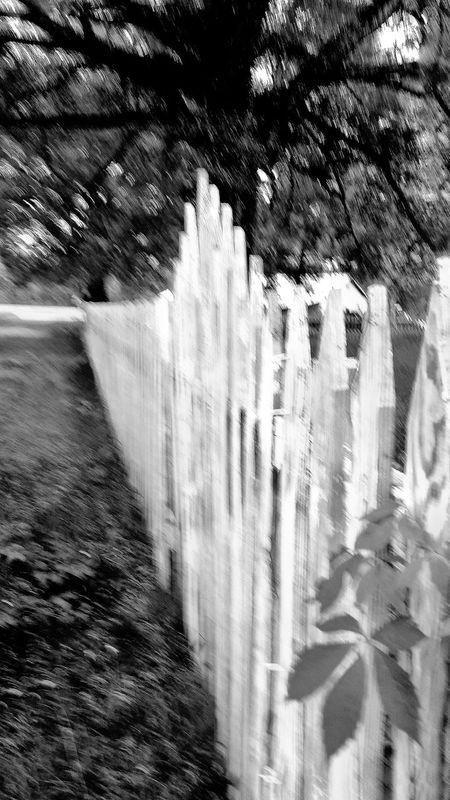 Black And White Photography Black And White Black And White Wooden Fence Old Whitewashed Wooden Fence Fence Photography Fence Gate Times Gone By Country Road Pealing Paint Old White Paint Times Past Country Life Spooky Trees Country Living Spooky Atmosphere Old Road Focus On Foreground Outdoor Photography Outdoor Pictures Yard Equipment Out Of Focus Blurred Photography