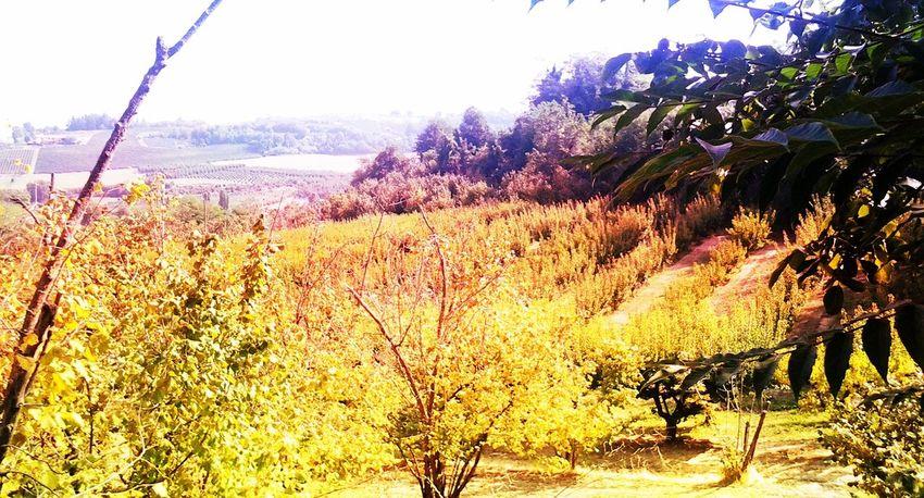 Italy Naturelovers