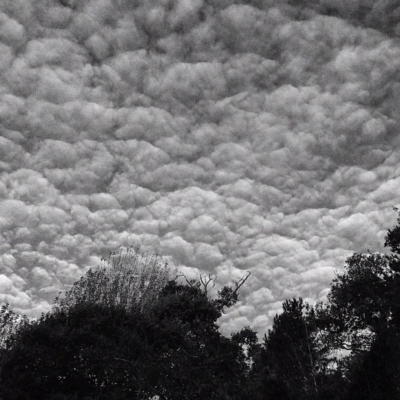 Clouds today.. #clouds #improvedimage #blackandwhite #sky Clouds Blackandwhite Sky Improvedimage