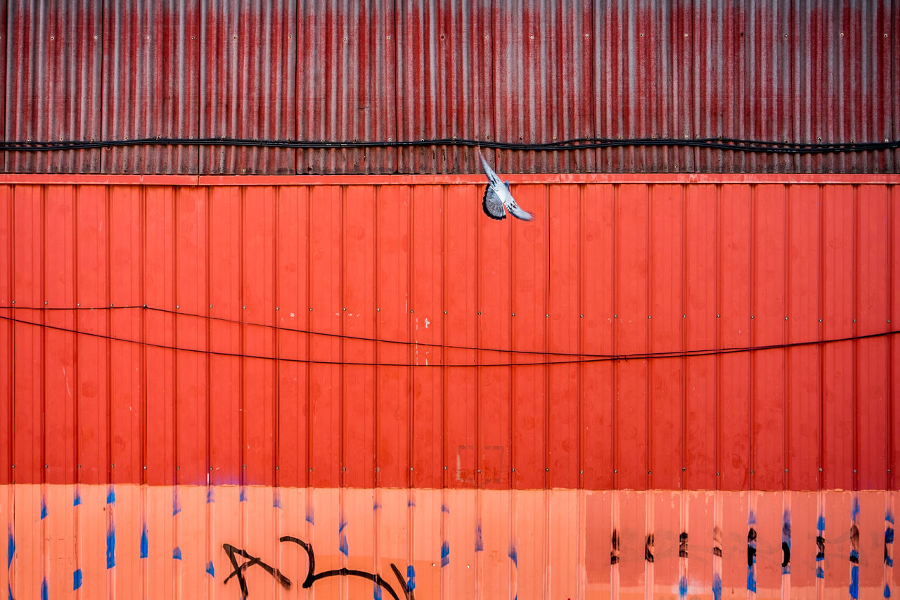 Red Pattern Corrugated Backgrounds Street Color Fragments Of Life Things I See Pigeon