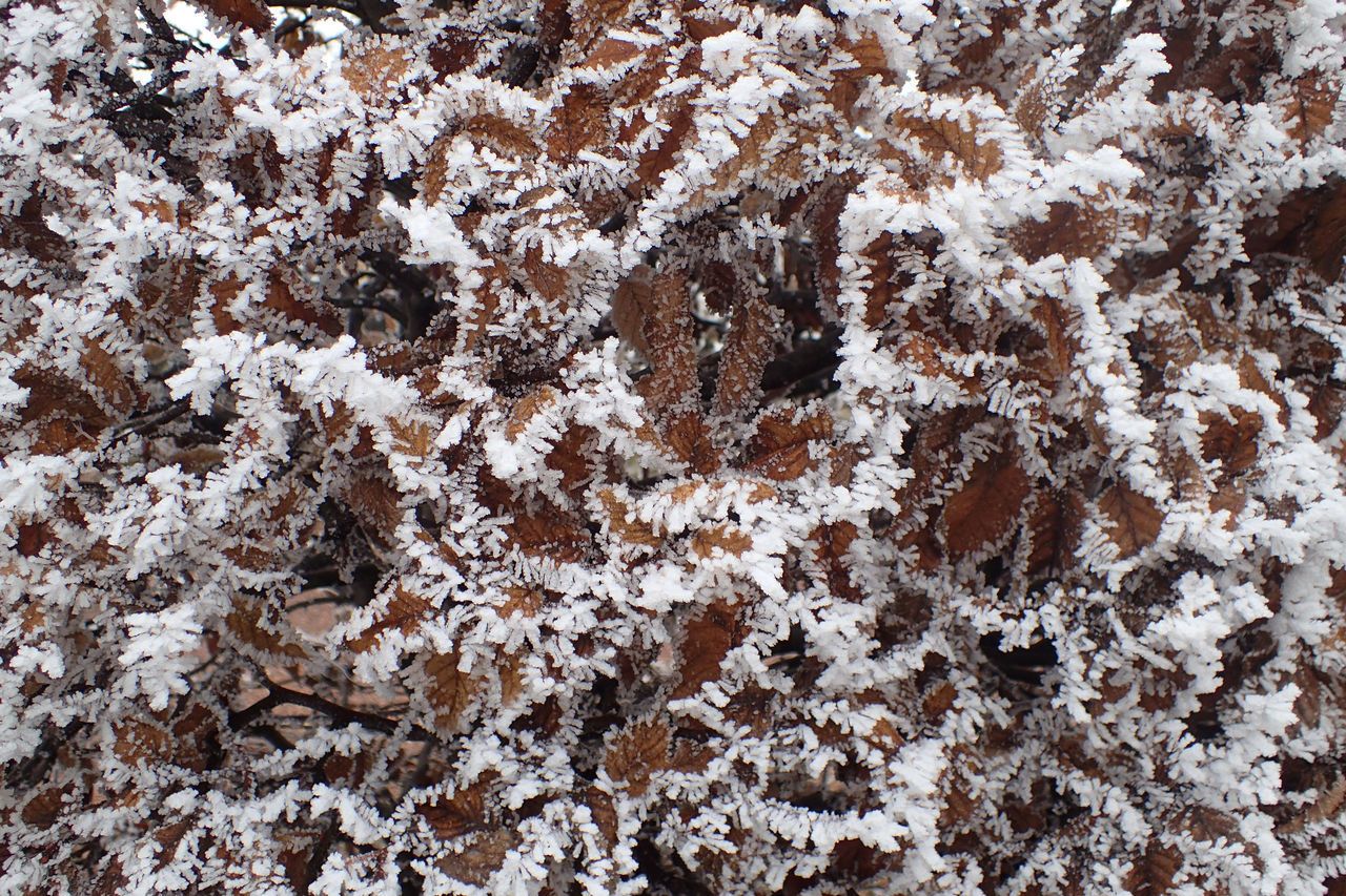 backgrounds, full frame, winter, snow, pattern, no people, close-up, nature, cold temperature, day, snowflake, outdoors