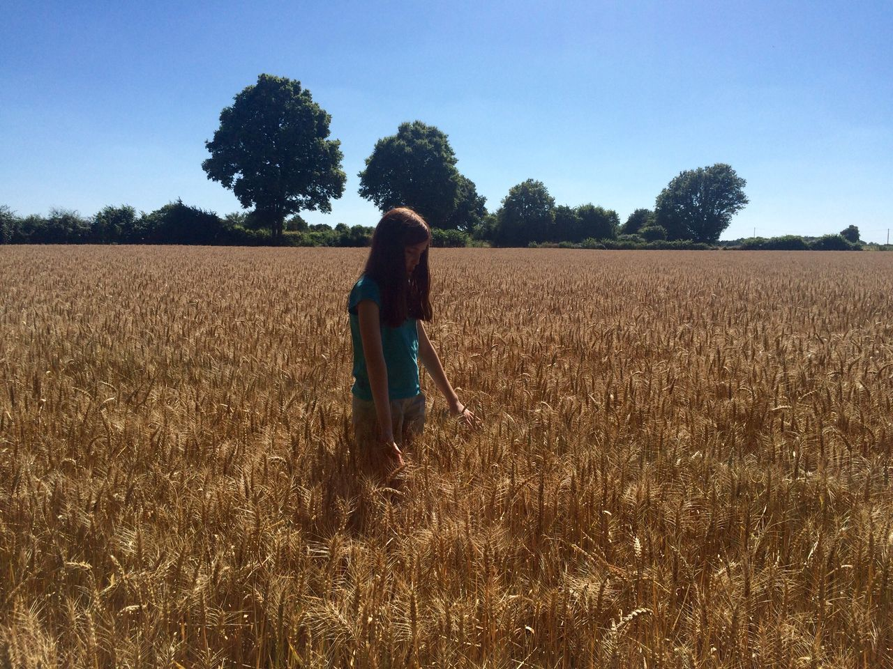 Memories Of Summer Summer Wheat Field France 🇫🇷 Family Blue Sky Wheat Crop  Sun Outdoors Trees Field The Great Outdoors