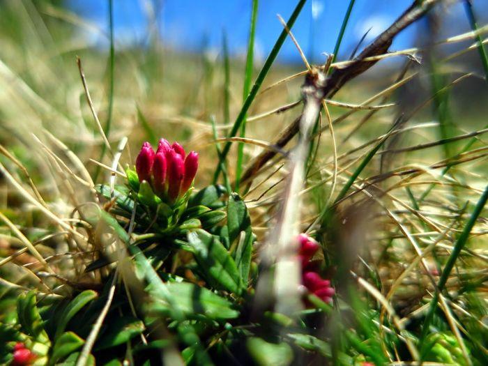 Depth Of Field Flowers Macro