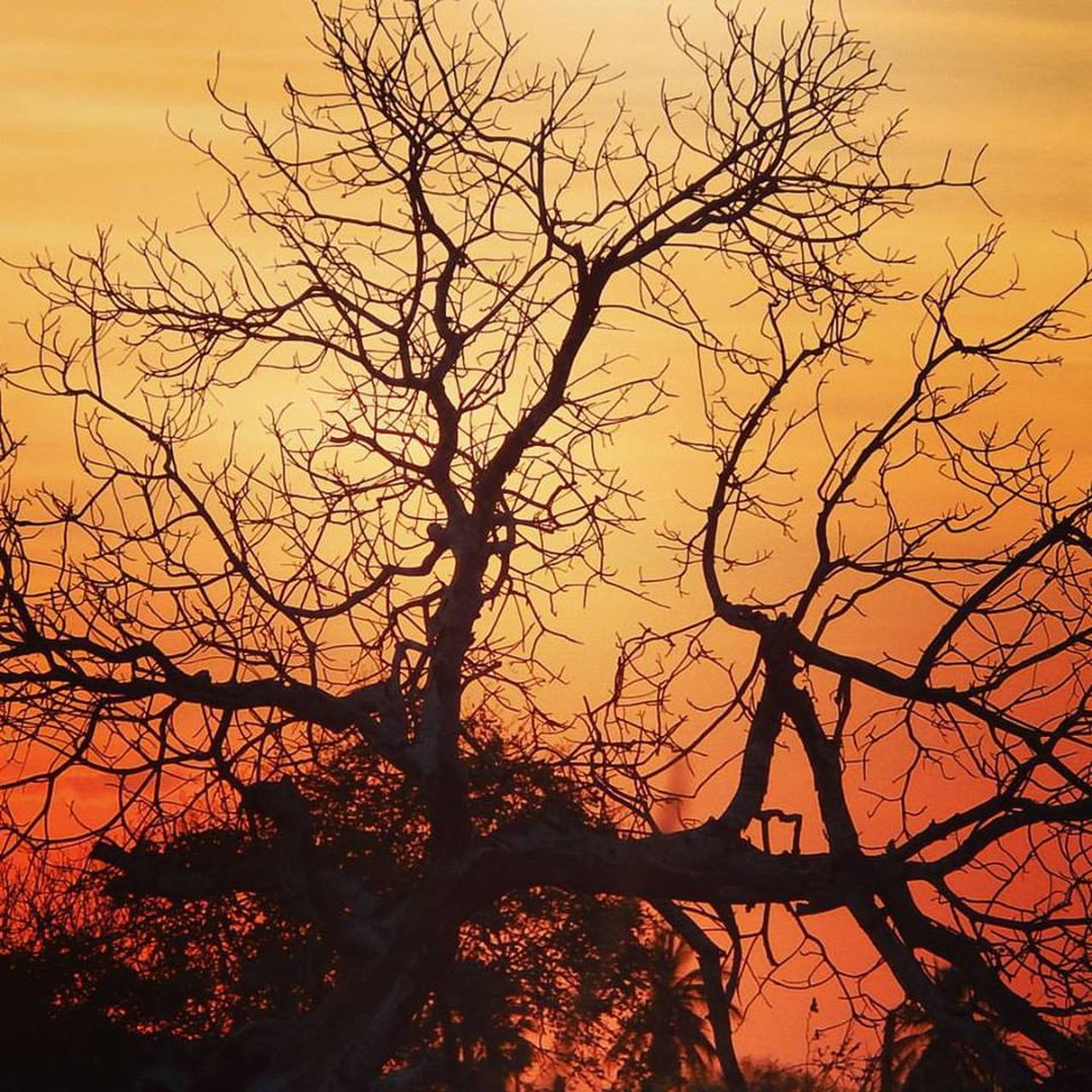 tree, bare tree, sunset, nature, branch, beauty in nature, silhouette, tranquility, no people, outdoors, sky, scenics, tranquil scene, low angle view, tree trunk, landscape, day, dead tree