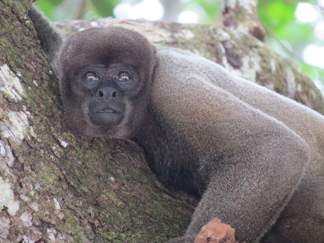 Amazon Amazon Rainforest Amazon River Amazonas Amazonas-Brasil Animal Themes Animals In The Wild Brazil Close-up Monkey Nature At Its Best Nature Up Close One Animal Primate